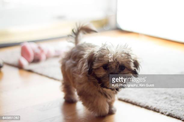 Puppy with wagging tail