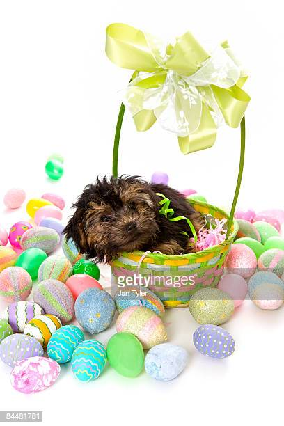 Puppy's First Easter