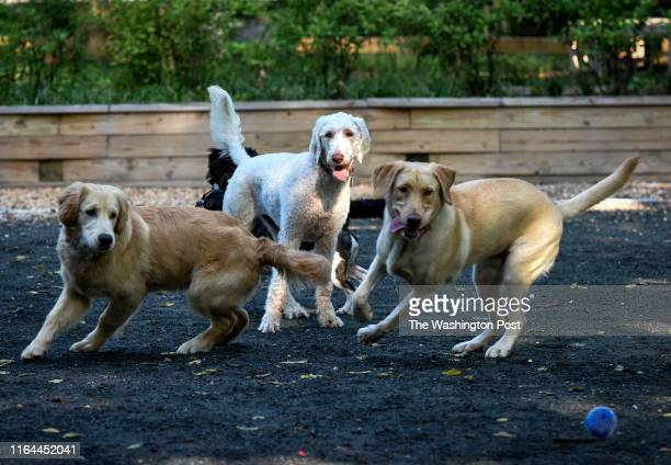 Pups chase a ball at a small dog park that is causing some friction between locals in Chevy Chase MD