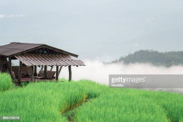pure green Rice terrace in the rainy season at the north of Thailand