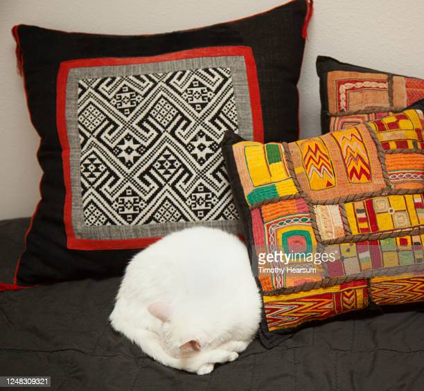 pure white domestic cat curled up and sleeping against colorful pillows - timothy hearsum stock pictures, royalty-free photos & images