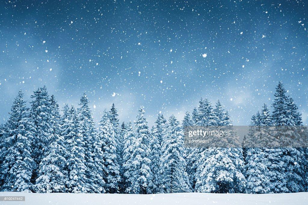 Pure Winter : Stockfoto