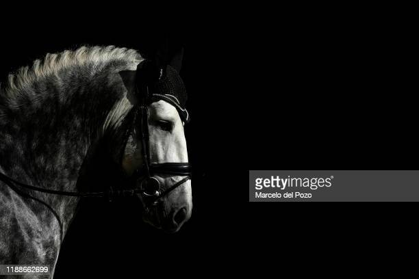 A purebred Spanish horse is seen during the Sicab International Horse Fair on November 19 2019 in Seville Spain Sicab is dedicated exclusively to the...