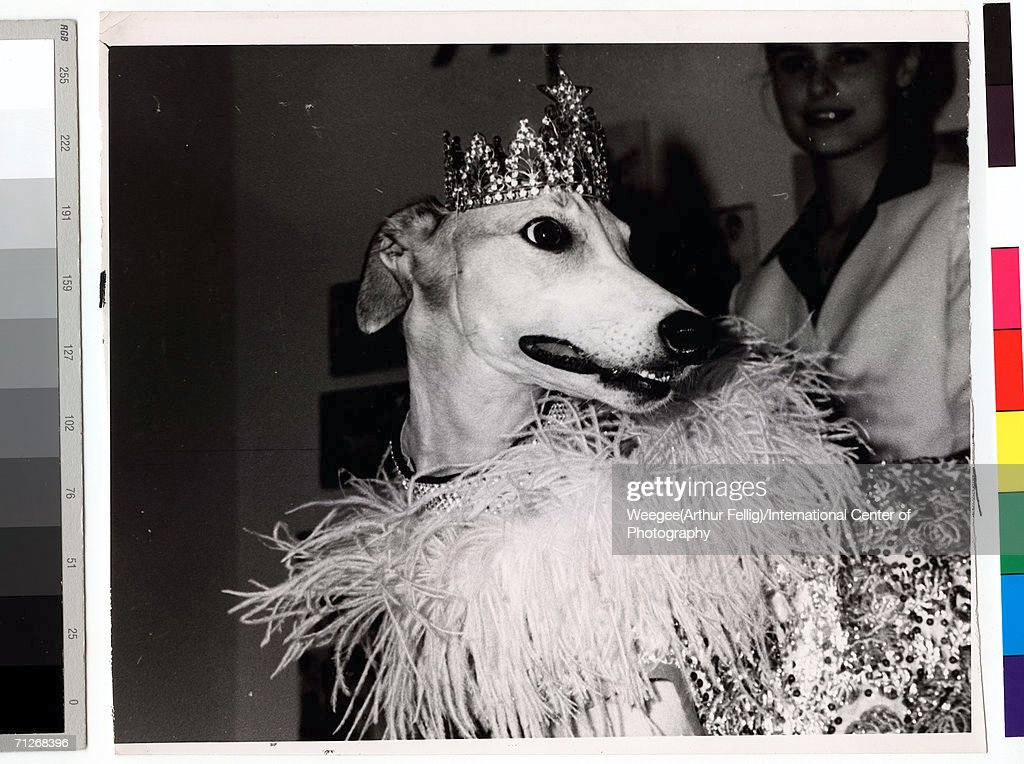 Lady Greyhound Pictures Getty Images