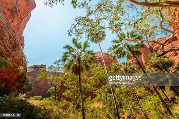 purnululu (bungle bungles) national park, western australia, australia. - international landmark stock pictures, royalty-free photos & images