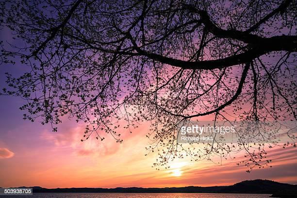 Purple and Pink Tree Sunset