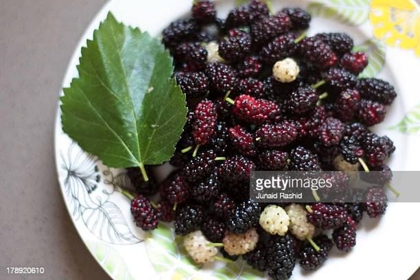 Purple and white Mulberry wild fruit