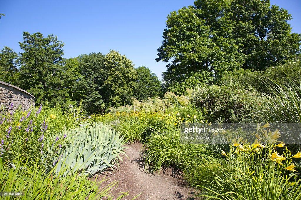 Purple And Yellow Perennial Garden Path