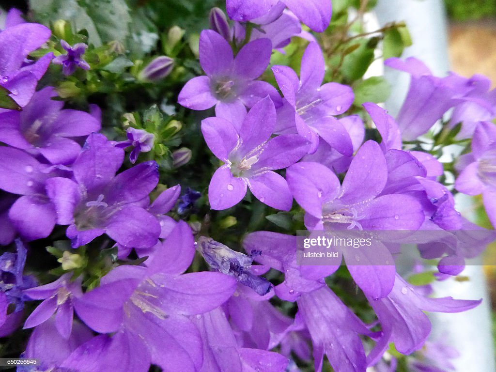 Blumen Pictures Getty Images