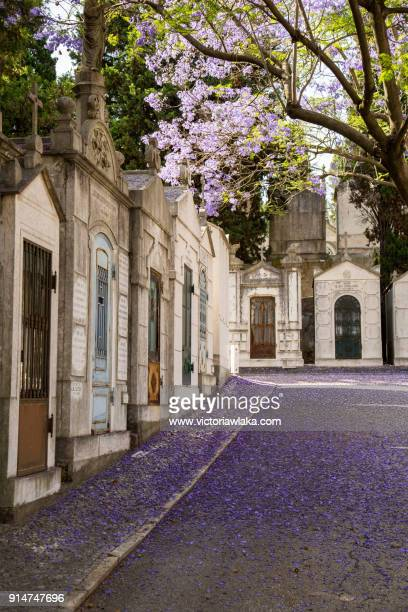 Purple blooming trees that lost some petals at Cemiterio dos Prazeres