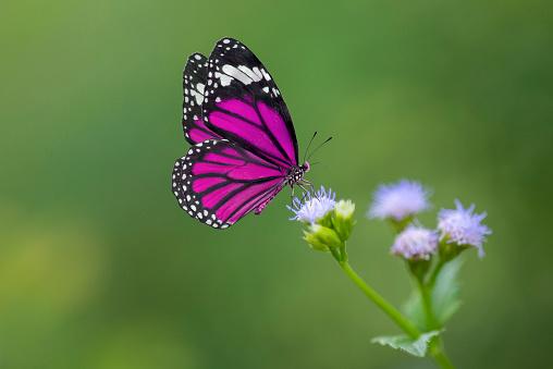 Purple Butterfly on flowers 970236748