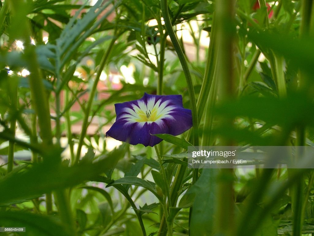 Purple Flower Blooming At Park : Stock Photo