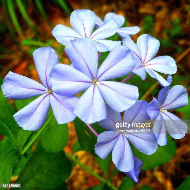 Purple flower blooming on plant