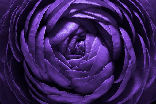 Purple Flower Macro Shot - gettyimageskorea