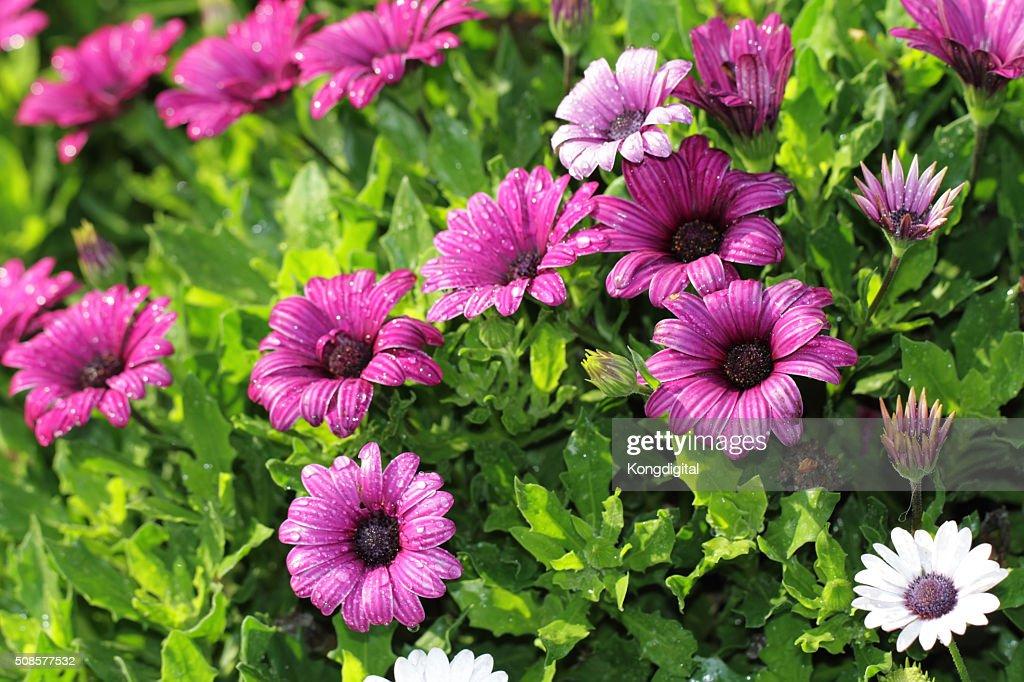 purple flower : Stock Photo
