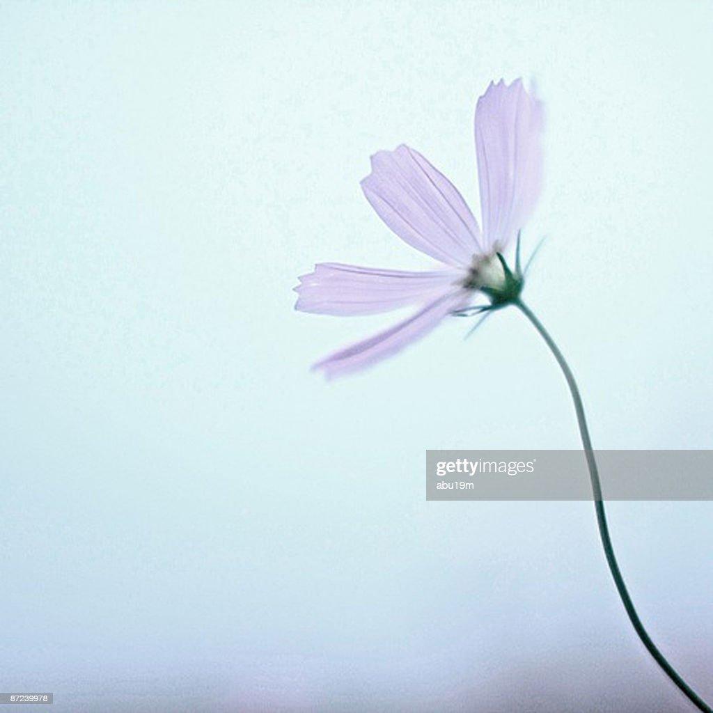 Purple flower  : Photo