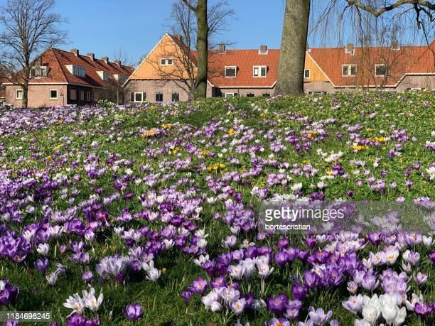 purple flowering plants by building - bortes stockfoto's en -beelden