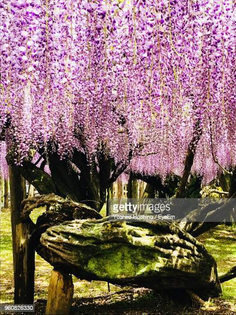 purple flowering plants in park - flowering plant stock photos and pictures