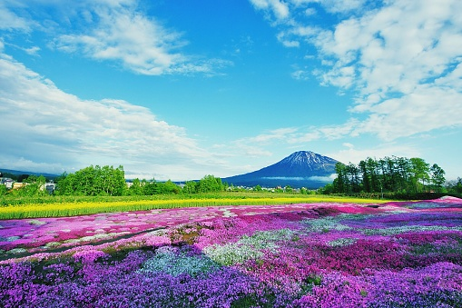 Purple Flowering Plants On Field Against Blue Sky - gettyimageskorea