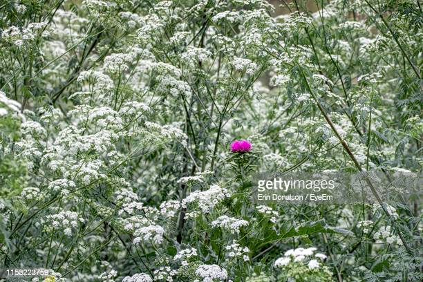 Purple Flowering Plants On Snow Covered Land
