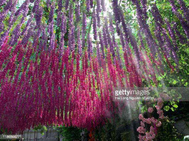 purple flowering trees in forest - shenzhen stock pictures, royalty-free photos & images