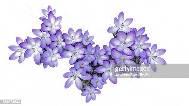 Purple Flowers Against White Background