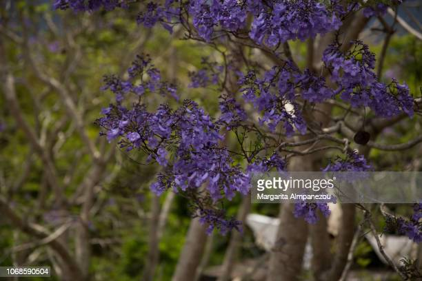 Purple flowers blooming on a tree branch