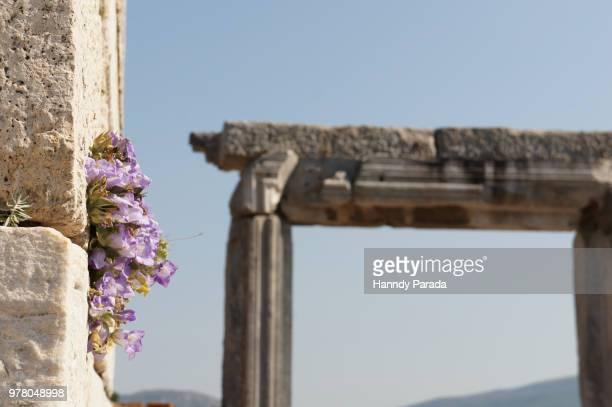 Purple flowers growing on temple, Antakya, Turkey