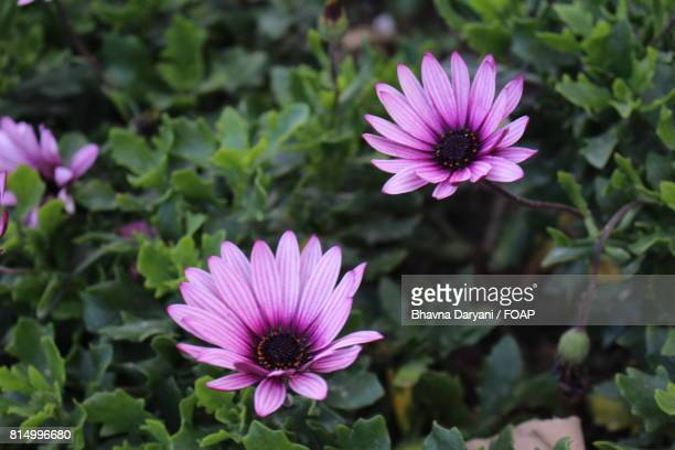 Purple flowers head
