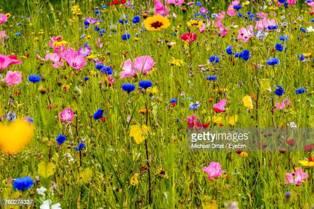 purple flowers in field - flower head stock pictures, royalty-free photos & images