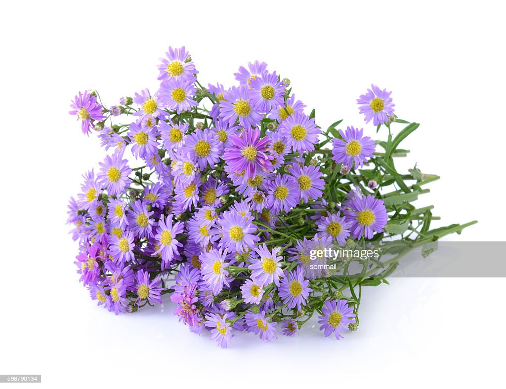 Purple Flowers On White Background Stock Photo Getty Images