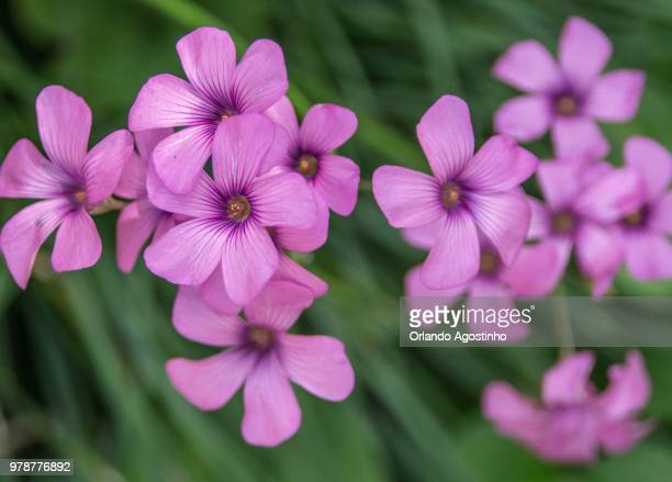 purple flowers - file:the_wyoming,_orlando,_fl.jpg stock pictures, royalty-free photos & images