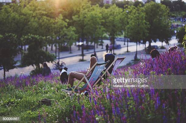 Purple flowers with people relaxing in park
