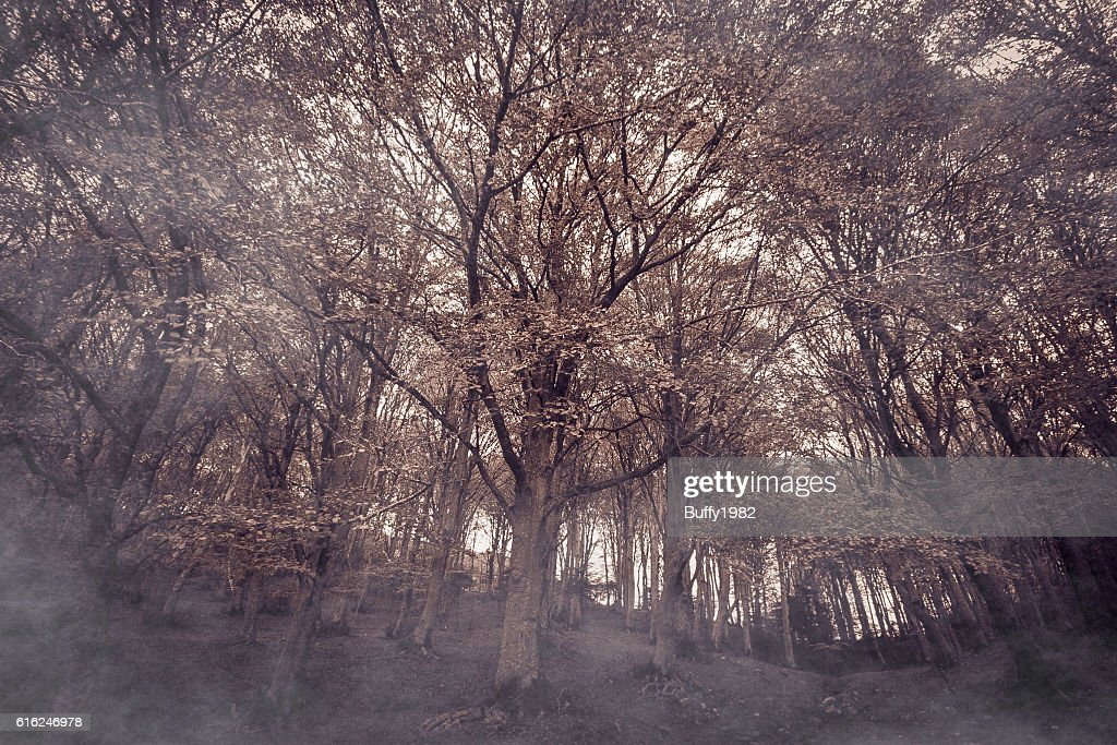 Purple forest : Stock Photo