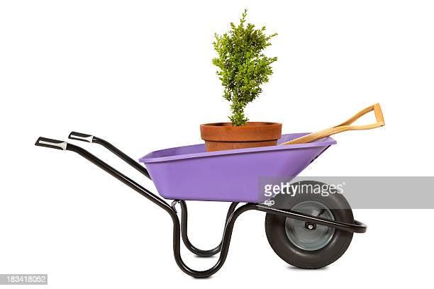 Violet jardin brouette avec Plante en pot