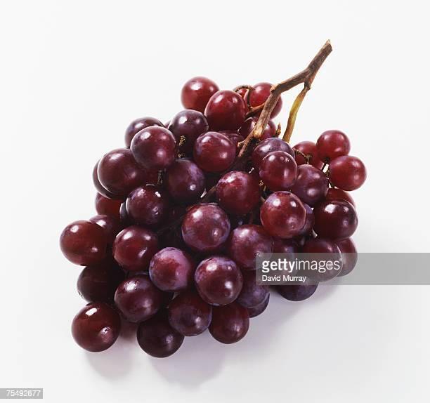 Purple grapes, bunch
