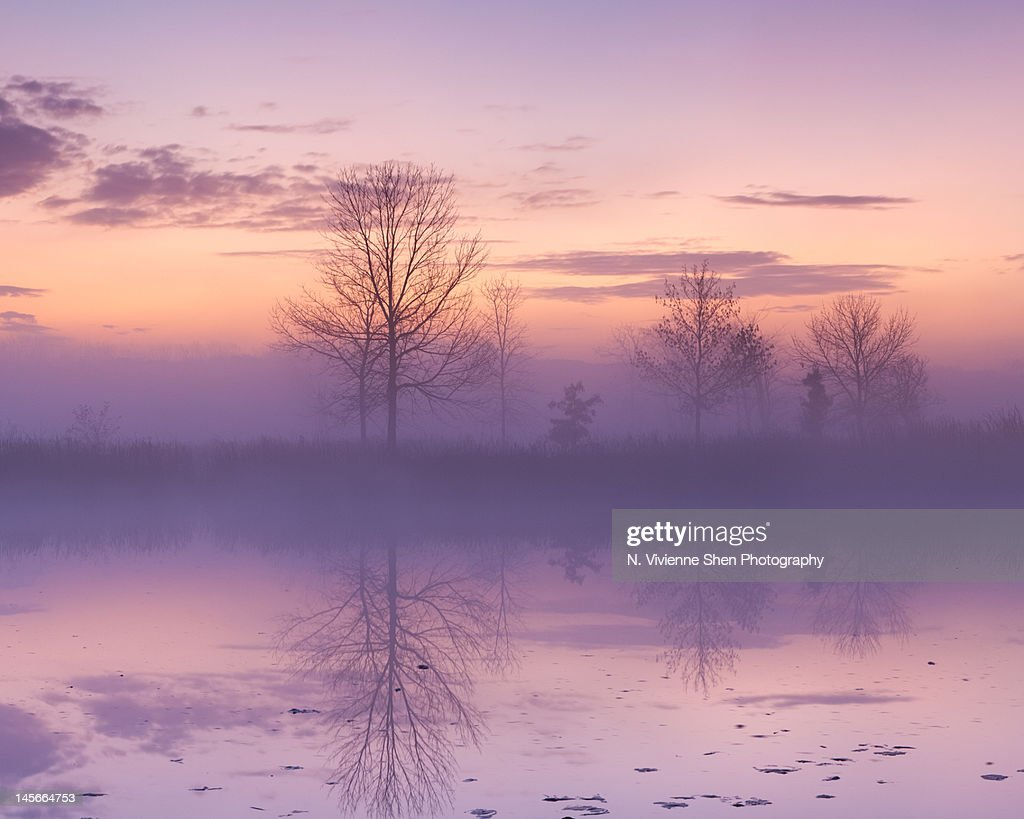 Purple Haze : ストックフォト