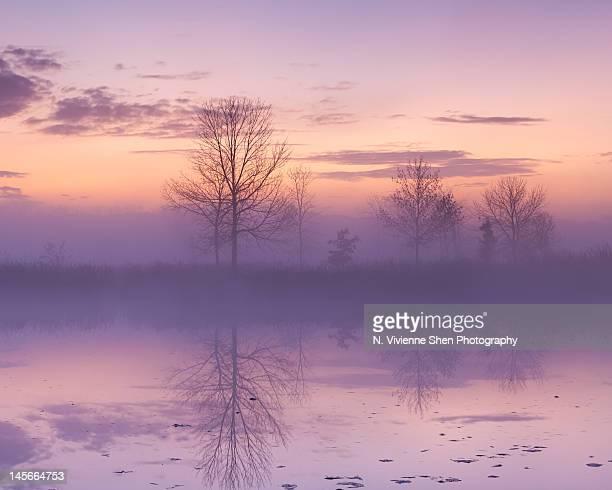 purple haze - レイクフォレスト ストックフォトと画像
