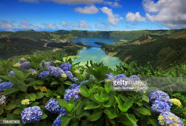 purple hydrangeas blooming against lake at azores - las azores fotografías e imágenes de stock