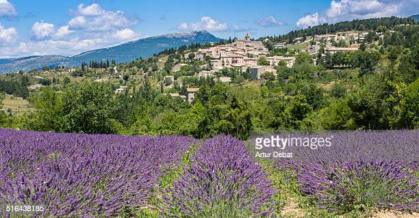 Purple lavender fields with rural town in Provence