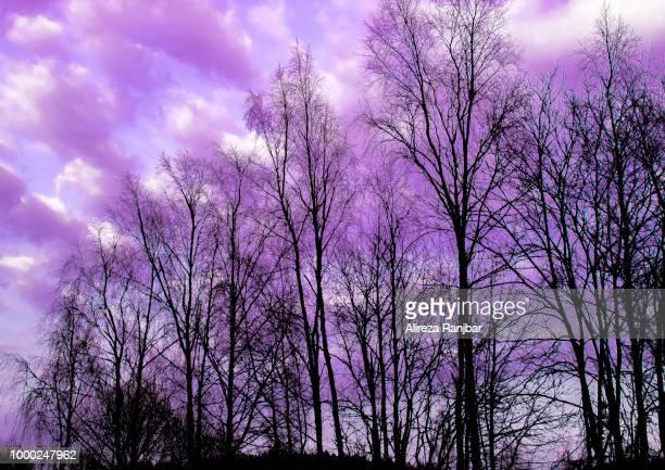 purple leaves.jpg