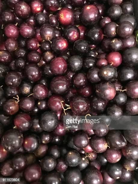 Purple Muscadine fruits (Vitis Rotundifolia)