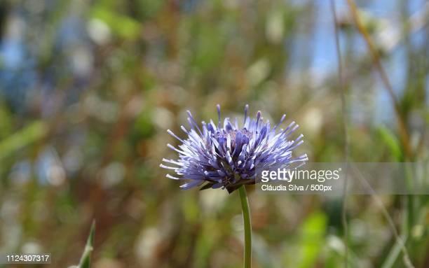 purple or blue - {{asset.href}} stock-fotos und bilder