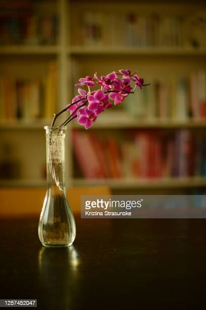 purple orchid in a vase on a black dining table by a bookshelf - kristina strasunske stock pictures, royalty-free photos & images