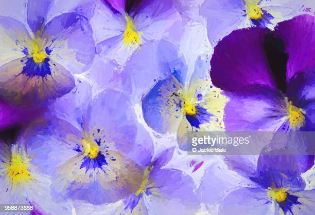 purple pansies - pansy stock pictures, royalty-free photos & images