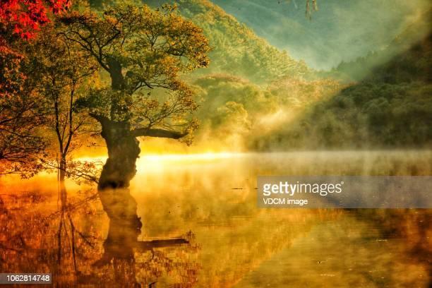paars - sprookjesboom stockfoto's en -beelden