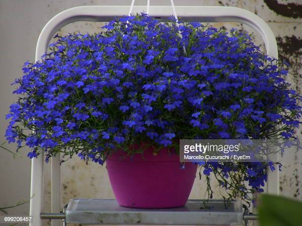 Purple Potted Plants