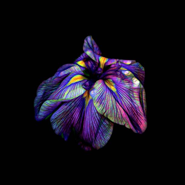 Purple Siberian Iris Neon Abstract