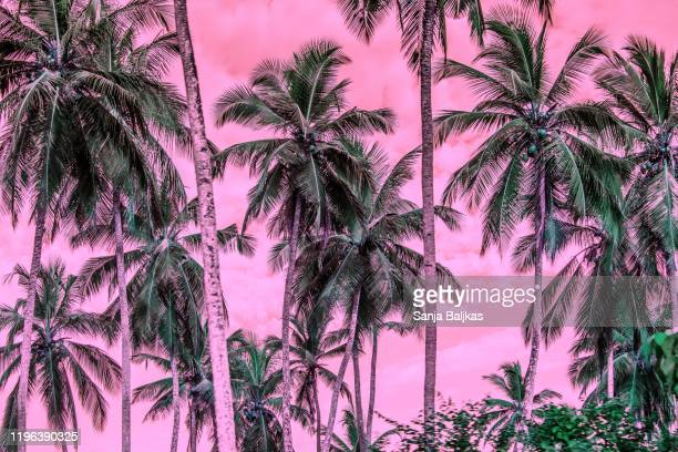 purple sky and palm trees - tropical tree stock pictures, royalty-free photos & images