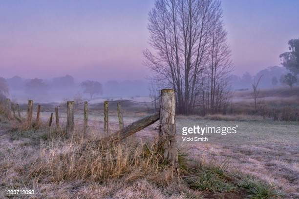 purple sunrise colors shining through dead trees with fence post and mist and frost - tamworth australia stock pictures, royalty-free photos & images